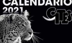 calendario cites