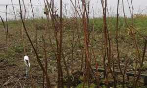 oleggio piante