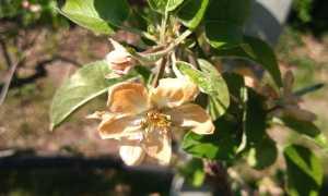 Fiore ramo